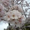 春の訪れです